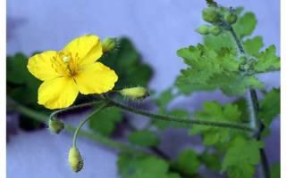 Урина лечение эндометриоза